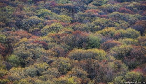 statepark new abstract nature wisconsin forest landscape spring nikon telephoto april fp devilslake 2016 d610 bgo