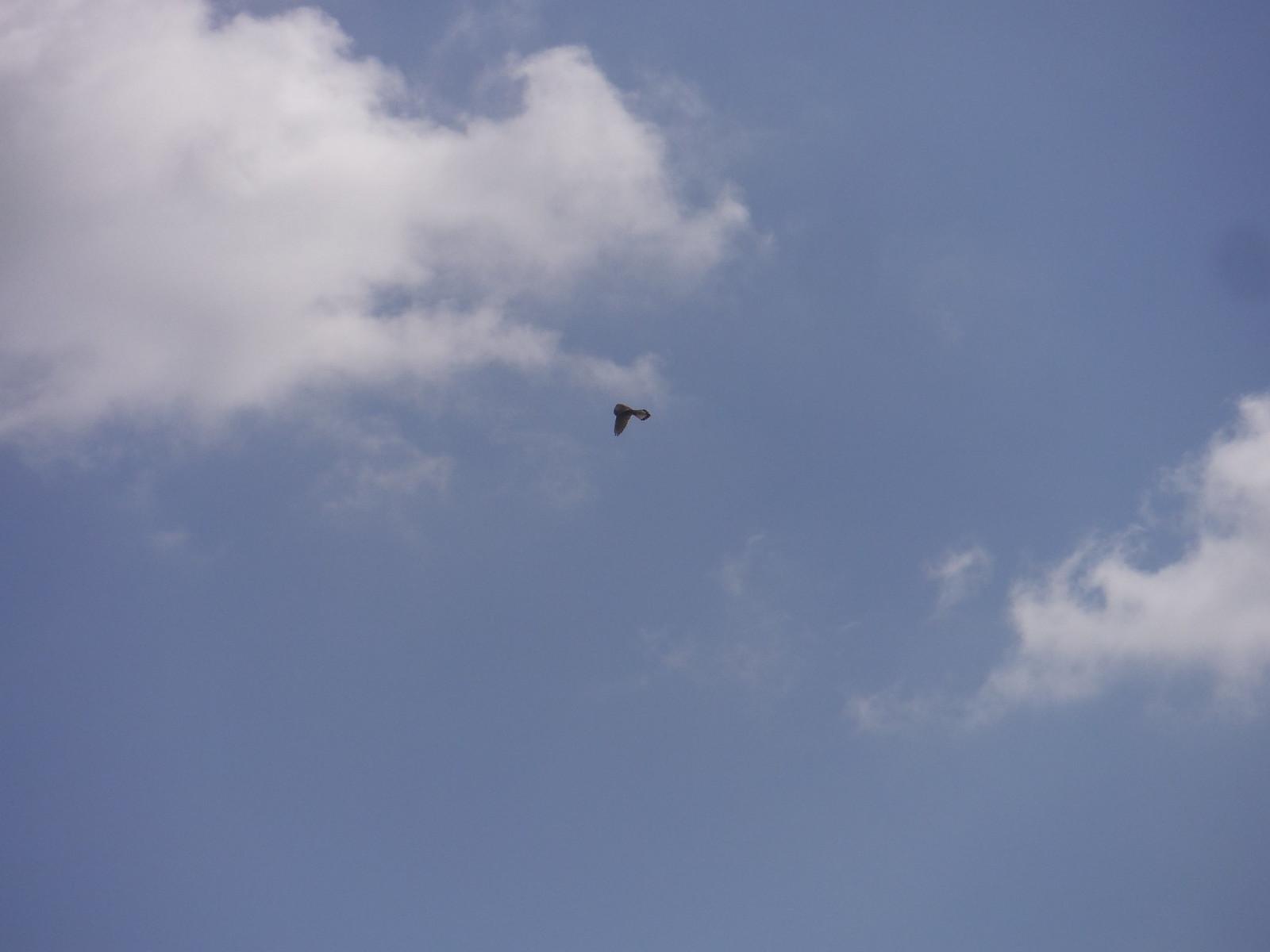 Hovering Predator SWC Walk 190 - Thame Circular