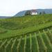 Vinařství Zlati Grič, foto: Petr Nejedlý