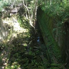 #7482 Chinese banyans (ガジュマル) attacking ruins