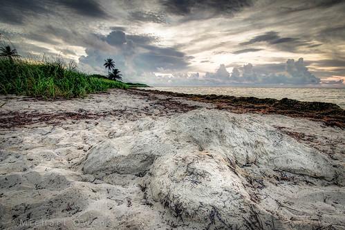 sculpture sunrise keys sand florida turtle loggerhead bahiahondastatepark sandspurbeach