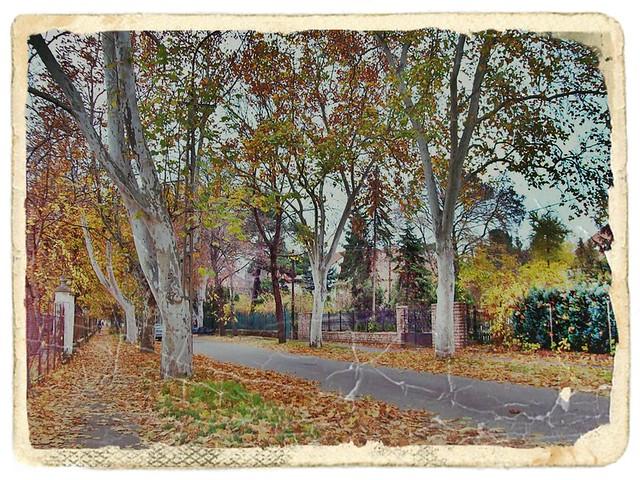 My fav trees,road,end of November-kedvenc fáim,utam november végén