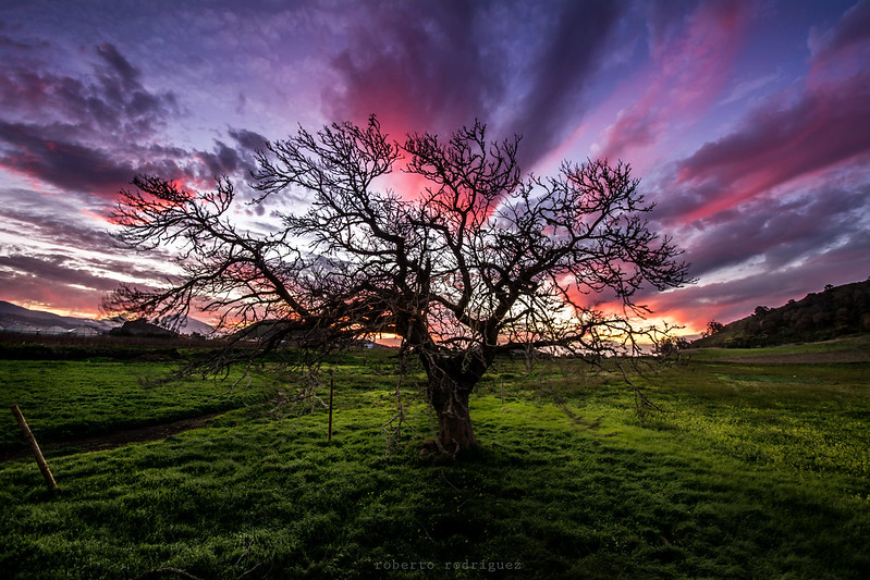 """""""A veces nuestro destino se asemeja a un árbol frutal en invierno. ¿Quién pensaría que esas ramas reverdecerán y florecerán? Mas esperamos que así sea, y sabemos que así será.""""  ―Johann Wolfgang von Goethe"""