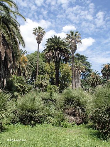 trip travel vacation italy holiday rome roma holidays italia botany altamons seekingscience
