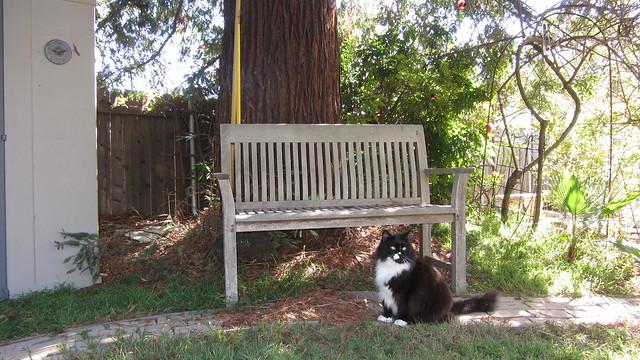 IMG_6367 sammy at redwood bench