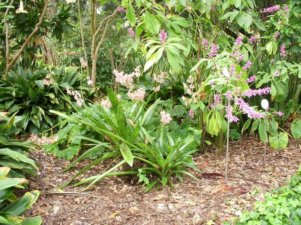 Jardin botanique de Puerto de la Cruz à Ténériffe Archipel ...