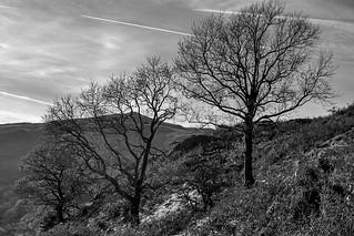 Mono Trees | by johnkaysleftleg