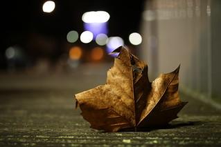 One leaf | by Digic-Vision