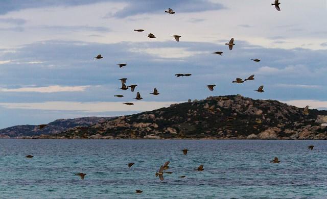 Volano gli uccelli volano nello spazio tra le nuvole con le regole assegnate a questa parte di universo al nostro sistema solare.....Franco Battiato