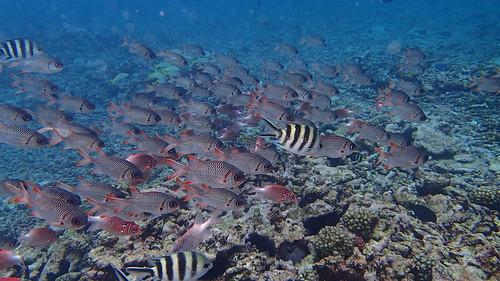 Snorkeling - Seychelles - Octobre 2014 (7)