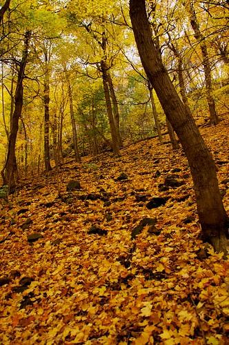 autumn orange yellow forest jaune automne nikon leafs feuilles parcdumontroyal d90 montréal forêt