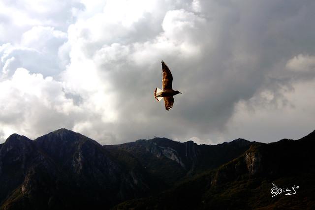 Vola in alto...
