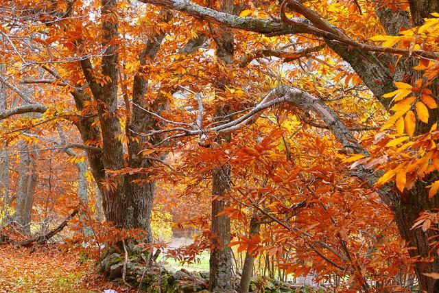 Hayedo de Montejo, el bosque más bonito que ver cerca de Madrid