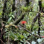 09 Viajefilos en Panama, Valle de Anton 16