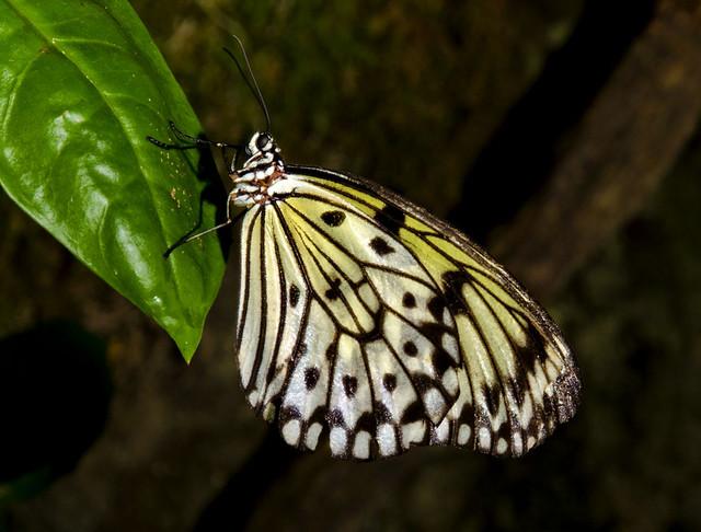 20160626_Cockrell Butterfly Center_0009