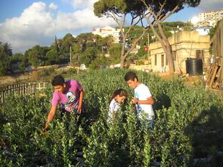 Jad Rawad & Lia Picking Blueberries Jun 21, 2015 | by toutberryfarms