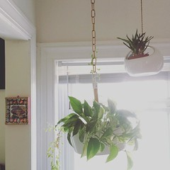 They're a growin' #design #succulents #ikeahack #hangingplants #lacatrina #decor #apartmentgarden #targetdoesitagain
