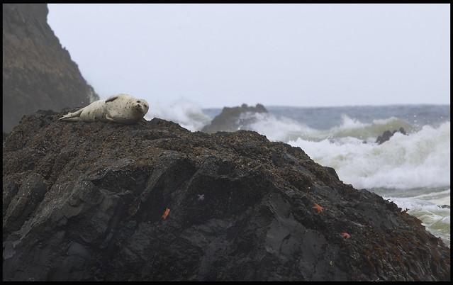 Seal and Sea Stars on the Rocks