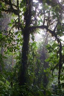 the magic light of cloudforest | by mirka s.