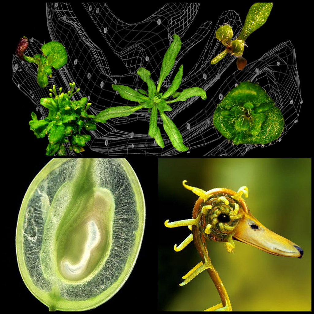Transform Scenario - Plant Mutations