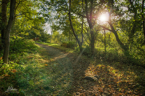 autumn trees sun sunlight green leaves golden woods colours lensflare hdr pathway