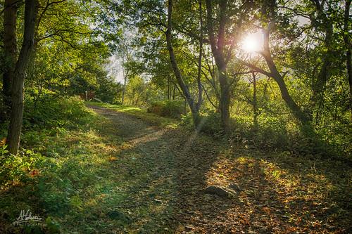 autumn trees sun sunlight green leaves golden woods colours lensflare hdr pathway