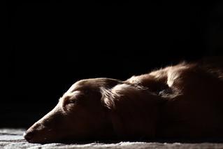 Sick dog | by Japanexperterna.se