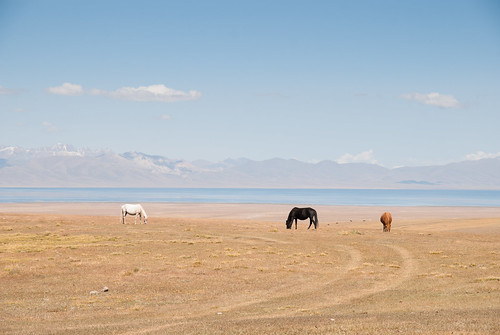 horse lake mountains animal nikon holidays asia flickr august centralasia kyrgyzstan wakacje 2014 biketrip mountans 3000m highquality kirgistan sierpien songkol d80 sonkul sonkullake