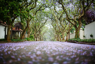Purple road 157/365 | by rafiq s