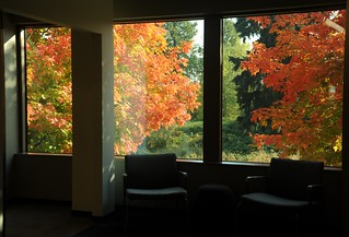 Fall colors at Microsoft, two chairs, lounge, Redmond Town Center, Washington, USA | by Wonderlane