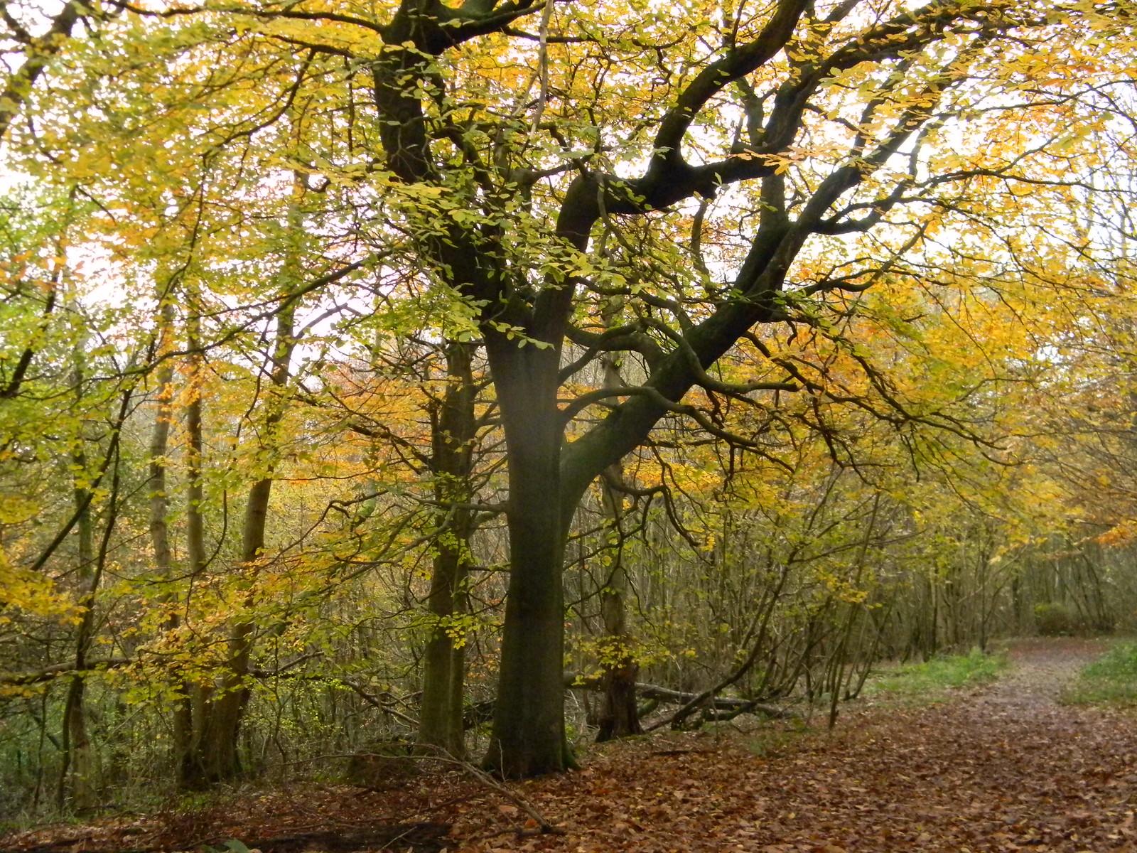 In Nut Wood Merstham to Tattenham Corner