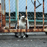 柵と錆と猫と私