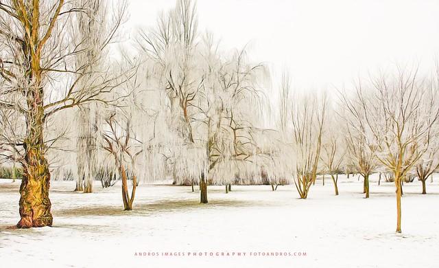 Días de escarcha. Pablo Neruda. Jardín de Invierno // Days of frost. Pablo Neruda. Winter Garden