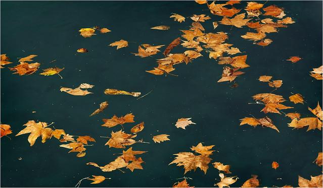 Ahorn - Herbst am Lago di Garda