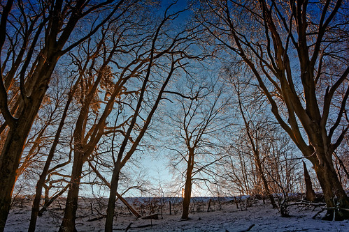 Iced Trees (See this Big)
