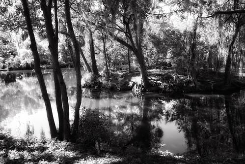 city park new orleans nola sony rx100 monochrome bw trees reflection lake lucymagoo lucymagooimages louisiana blackandwhite