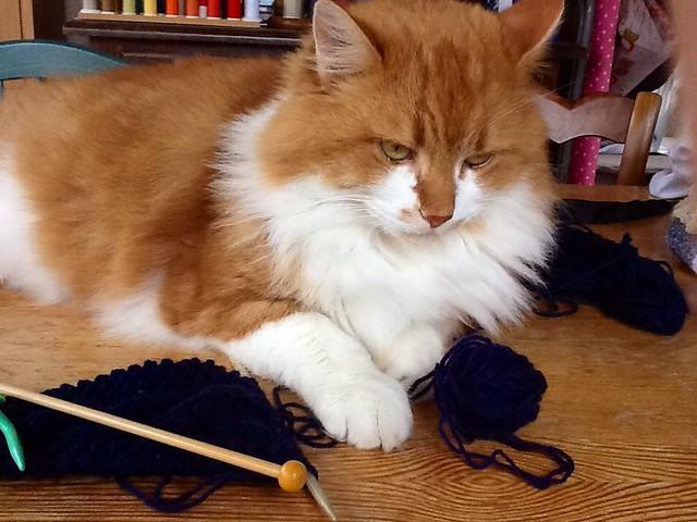 chat tricoteur