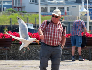 A Small Group Of Herring Gulls On The Atlantic Island of Helgoland Have Learned To Snatch Ice Cream Comes From Tourists | by PerAnd1