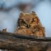 Alexa Boyes - Sunshine Owlet  - 2nd Place - Flora & Fauna