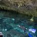 Freediving Dos Ojos cenotes Tulum, Mexico