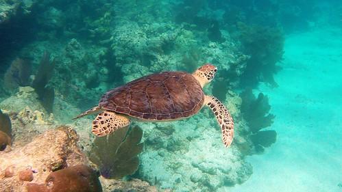 Snorkeling Key West, Florida | by SNORKELINGDIVES.COM