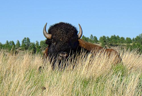 park black grass buffalo state south hills fujifilm herd dakota custer xt1