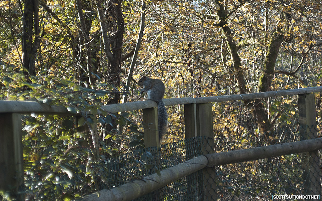 A squirel on the Caerleon cycle path