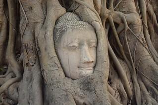Wat Mahathat (Ayutthaya, Thailand 2014)