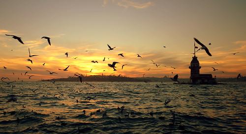 seagull ngc istanbul salacak flickrunitedaward vabserk