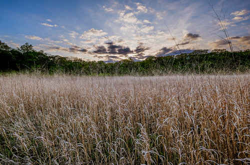 sunset nature grass landscape us newjersey spring unitedstates dusk nj prairie flowersplants southbrunswicktownship davidsonsmillpondpark