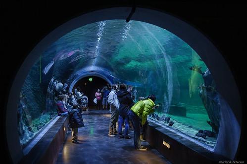 fish aquarium shark utah marine structure draper livingplanetaquarium charlesrpeterson petechar sonyrx100m3