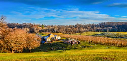 autumn fall america virginia three vineyard vines estate unitedstates wine hill winery vineyards american va fox hillside northern delaplane ilobsterit