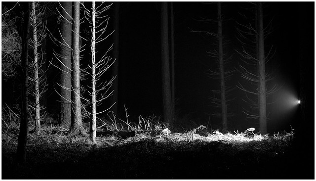 deep in the woods @ night #2