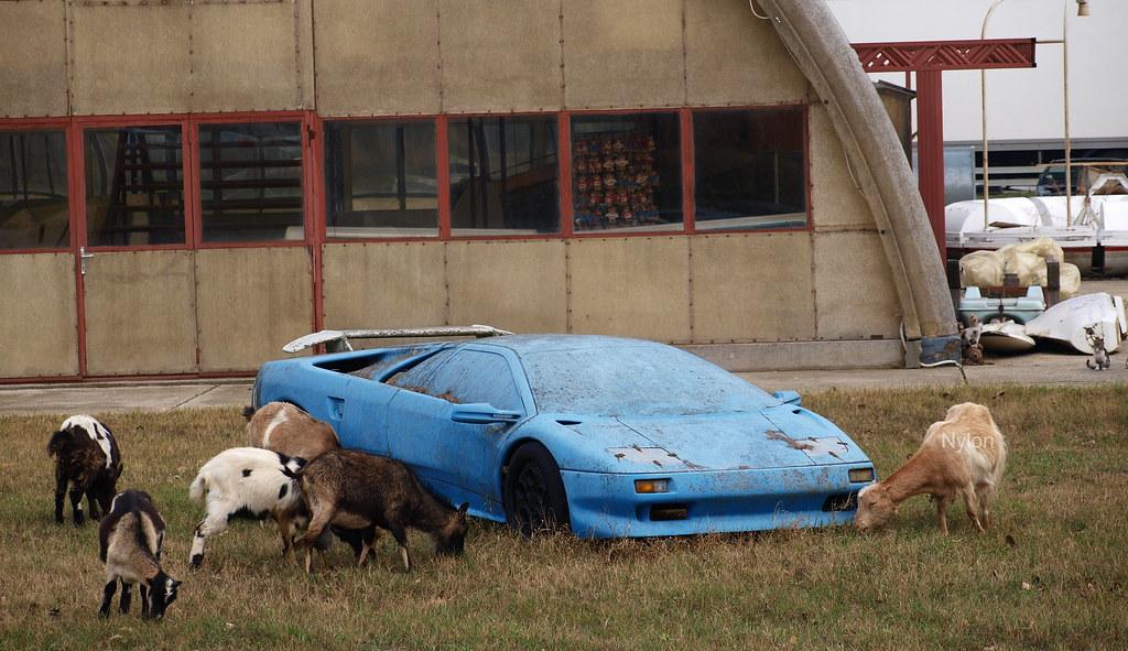 Lamborghini Diablo Goat Edition Nylon Flickr